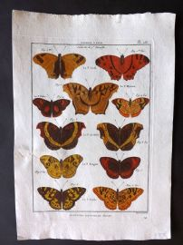 Diderot C1790 Antique Hand Col Print. Butterflies 28